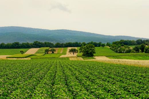 Wichtigste Begriffe des bäuerlichen Bodenrechts