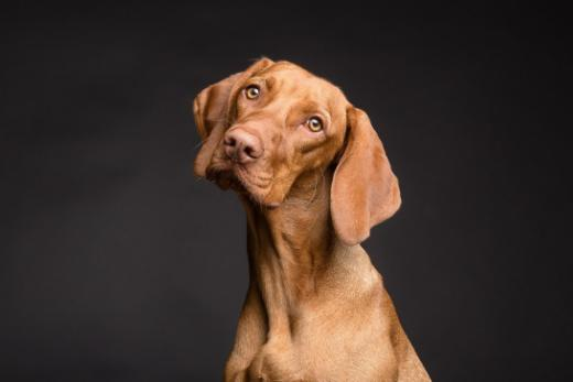 Espace de téléchargement, bases légales et liens - Affaires canines