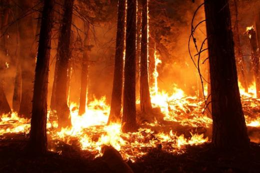 Danger d'incendie de forêt : Interdiction de faire des feux dans les forêts du canton de Fribourg