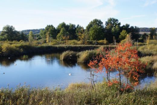 Gesetz über den Natur- und Landschaftsschutz - Vollzugshilfe