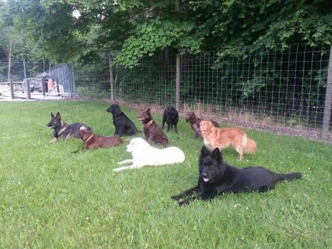 Détention de plus de quatre chiens adultes
