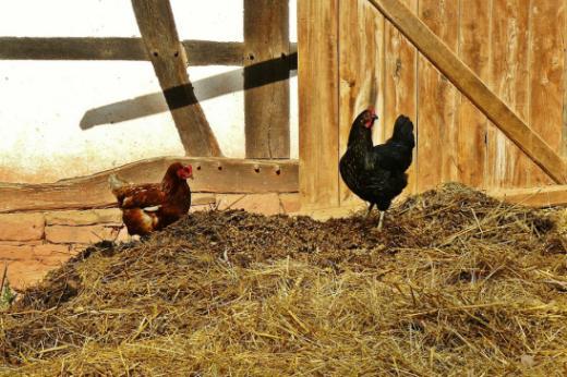 Détention d'animaux de rente, de compagnie, sauvages et d'expérimentation