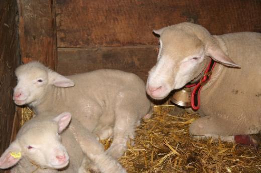 Permis de construire pour la détention de moutons