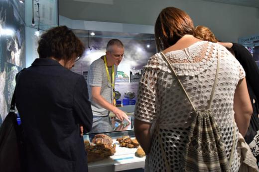 Visitez le Musée d'histoire naturelle en groupe