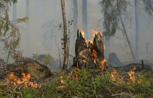 Waldbrandgefahr: Bevölkerung wird zur Vorsicht aufgerufen
