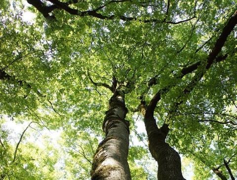 De mémoire d'arbre