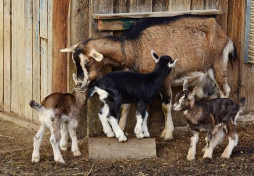Le rapport sur la protection des animaux 2018 est en ligne
