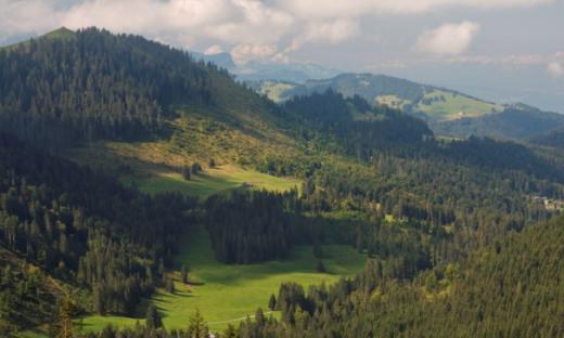 Les forêts domaniales
