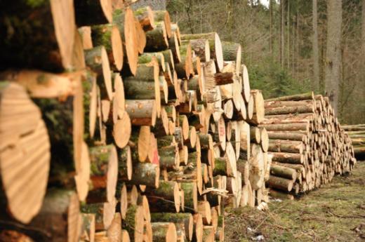 L'utilisation du bois dans le canton de Fribourg