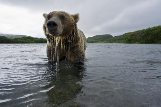 Mon voisin l'ours brun