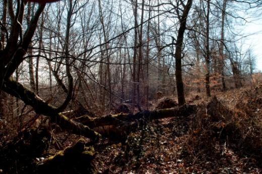 Vieux bois et bois mort