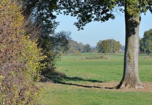 Une notice d'information pour gérer correctement les branchages après une coupe de bois en zone agricole
