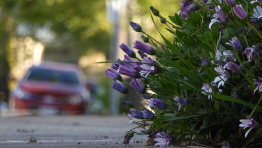 Des routes fleuries