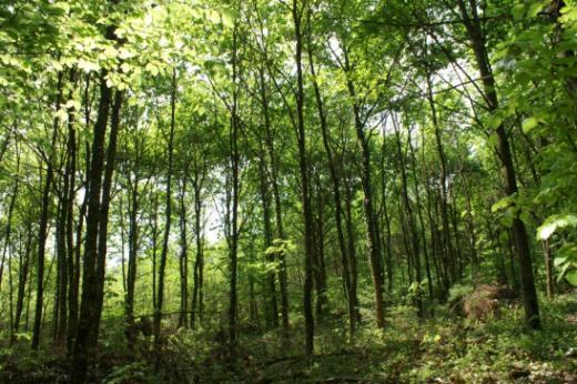 SFN - Secteur Forêt