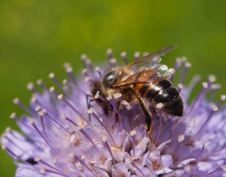 Biodiversität im Siedlungsraum - Ideen für Private