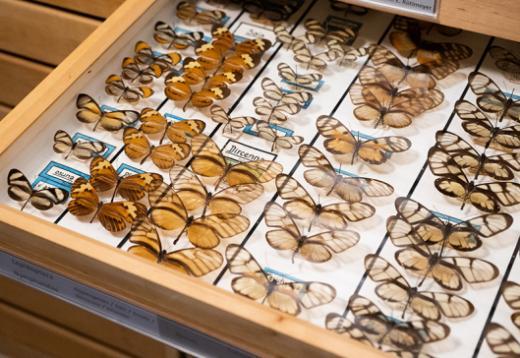 Blick auf die Sammlung
