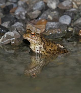 Teiche und Weiher für Amphibien anlegen