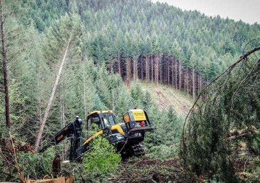 20 Jahre nach Lothar: Bergholztage