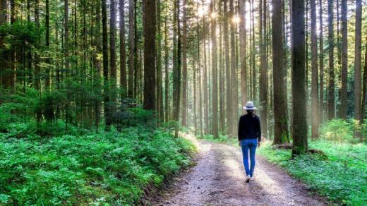 Les forêts fribourgeoises 20 ans après Lothar