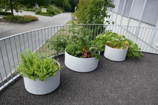 Die Natur findet ihren Platz beim Gebäude des Amts für Umwelt