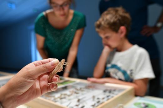 Erste Zahlen zum Inventar der Libellen im Kanton Freiburg