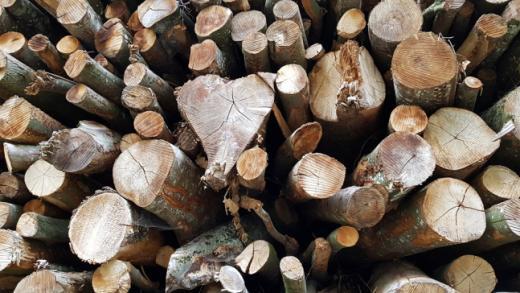 Grosse Energieholzreserve sollte genutzt werden