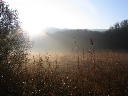 Naissance du Service des forêts et de la nature (SFN)