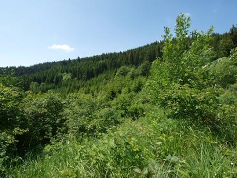 Gestion durable des forêts fribourgeoises