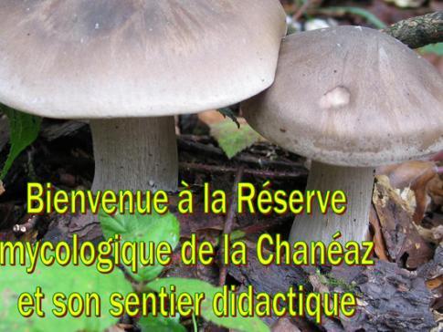 La forêt domaniale de la Chanéaz - réserve mycologique