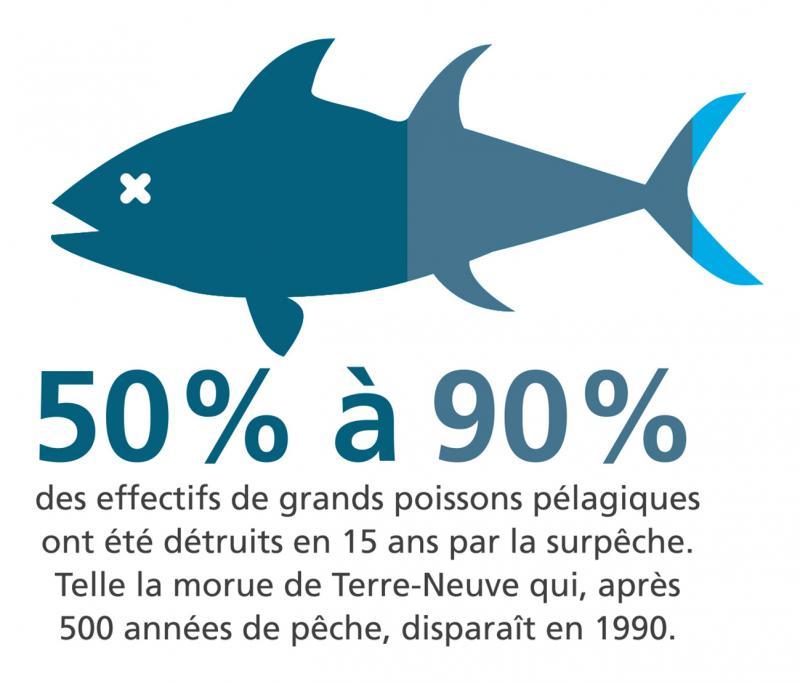 Pour réduire mon impact sur l'environnement, j'achète du poisson de la région, d'élevage durable ASC, de pêche durable MSC ou bio