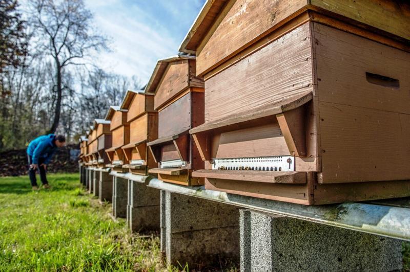 Das Bild zeigt das Schulbienenhaus