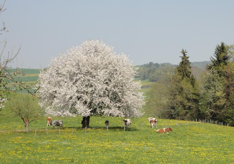Troupeau au printemps
