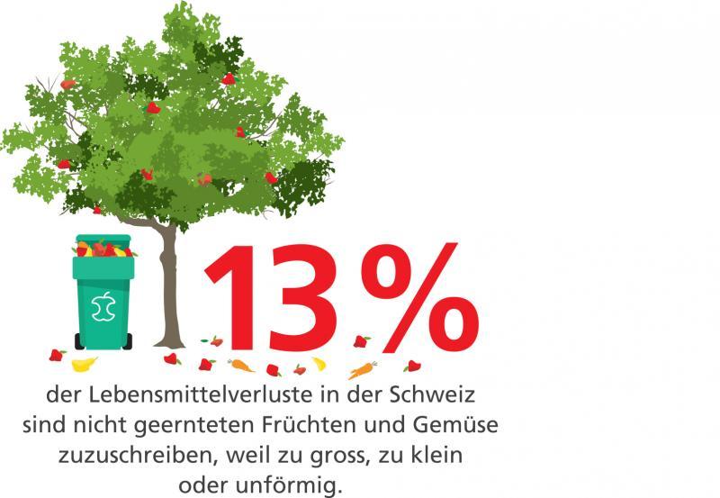 13% der Lebensmittelverluste sint nicht geernteten Früchten und Gemüse zuzuschreiben, weil zu gross, zu klein oder unförmig