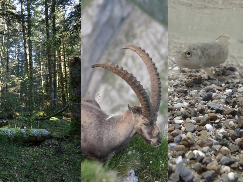 Secteur faune, biodiversité, chasse et pêche