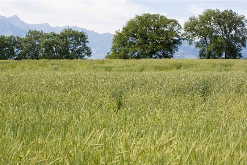 La photo illustre les champs de la ferme de Sorens