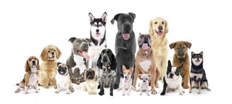 photo d'ensemble de différentes races de chiens