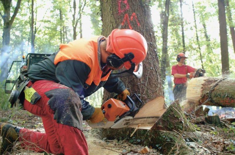 Forestier-bûcheron CFC