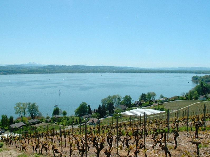 lac de morat depuis les vignes