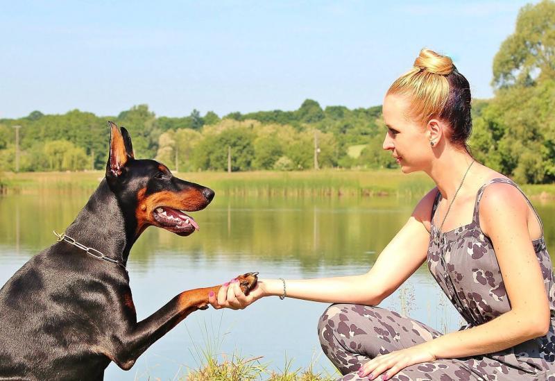 Soins aux animaux - Behandlung von Tieren