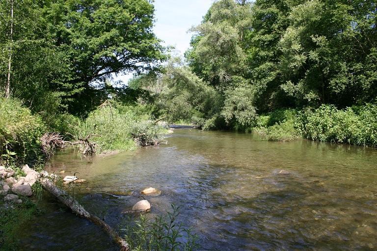 Les zones alluviales - entre terre et eau