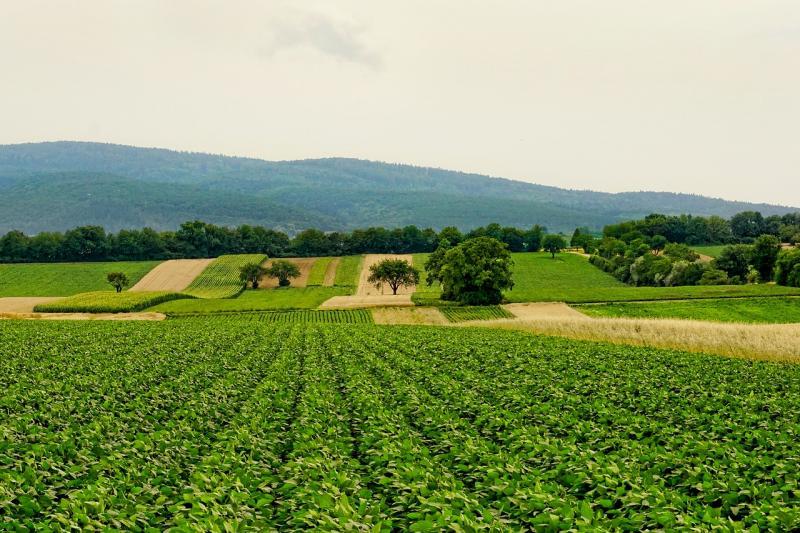Agriculture - Landwirtschaft