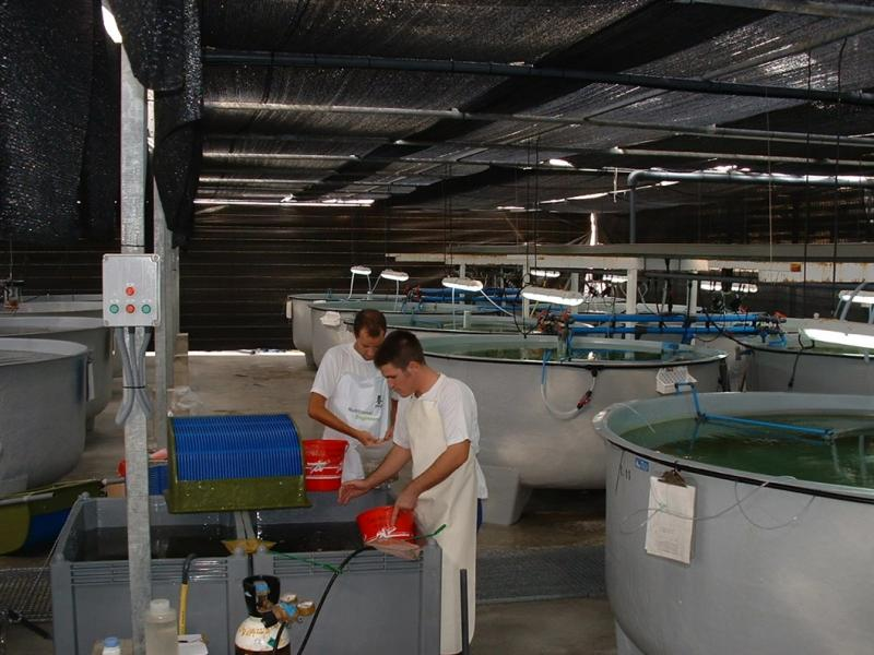 Photo montrant un bassin pour les poissons