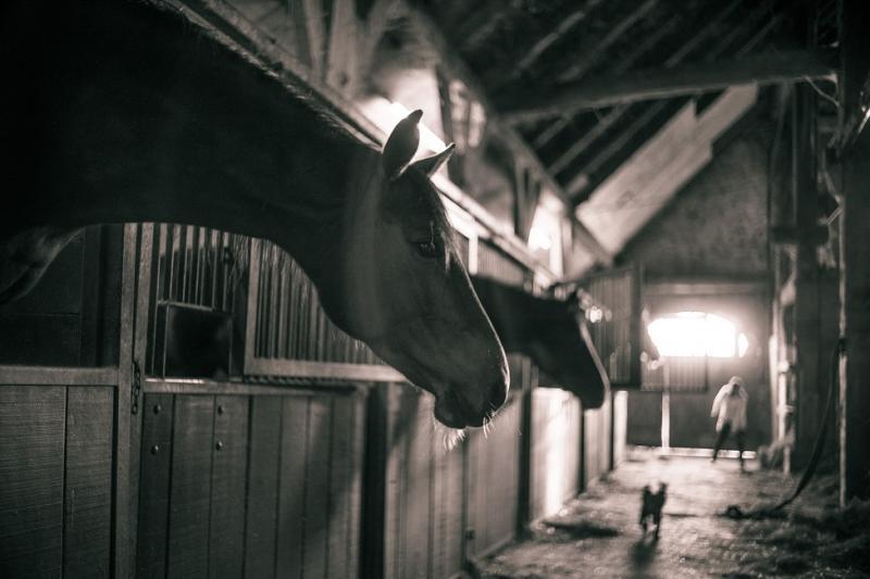 Das Photo zeigt Pferde in ihren Boxen
