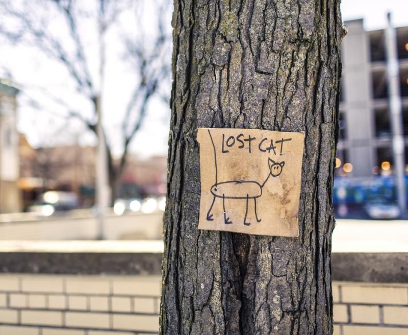 Das Photo zeigt ein handgezeichnetes Plakat einer vermissten Katze an einem Baum