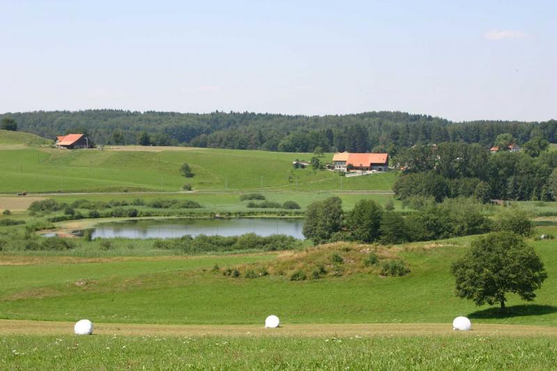 Site marécageux du lac de Lussy