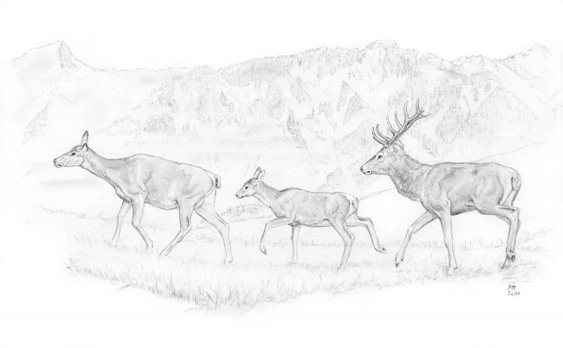 Konzept Wald und Hirsch