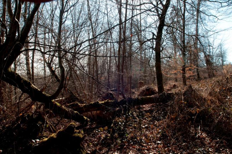Altholz und Totholz