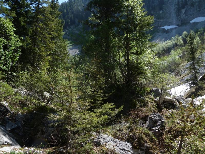 Réserves forestières