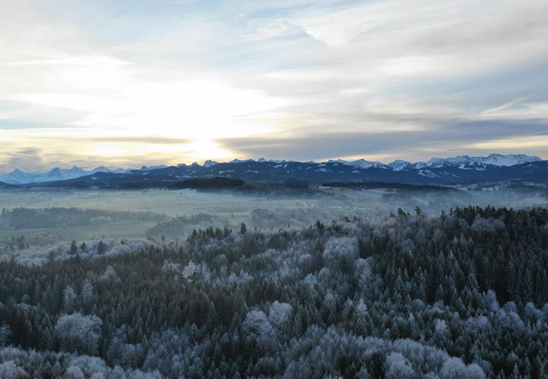 Kalter Morgen beim Lanthenholz Schmitten