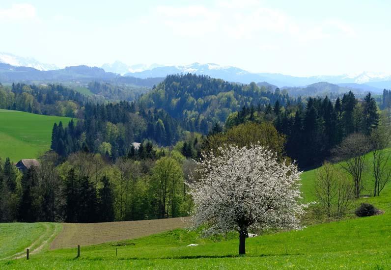 Landschaft Hostettlen bei Ueberstorf_oberhalb des Sensegraben